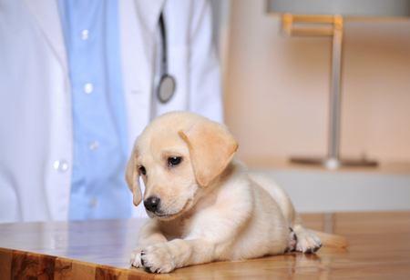 new puppy Cremorne