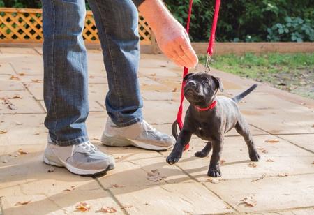 preschool for puppies in Cremorne
